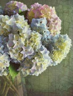 Meer over de hortensia op www.mooiwatbloemendoen.nl/alles-over-bloemen/hortensia