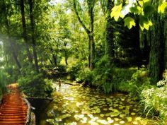 imágenes de la selva, puente wallpapers, lirios de agua de vectores, reservorios fotos, matorrales fondos, fotos de verano, mat