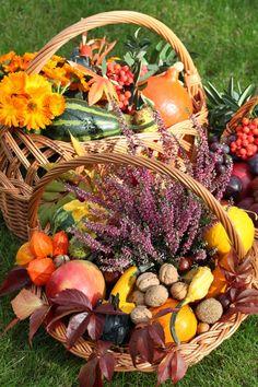 Wrzos wygląda dobrze w kompozycji z jesiennymi kwiatami takimi jak chryzantemy, dalie, pelargonie oraz wiele innych. Do wrzosów pasują również używane w sezonowych kompozycjach dynie, jabłka czy orzechy. Zdjęcie: http://kwiaty-doniczkowe.wieszjak.pl/