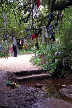 Wish Tree in Madron, Cornwall