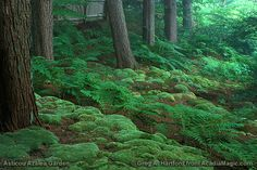 This is what I would love to have our wooded backyard look like - with all the ferns and moss.