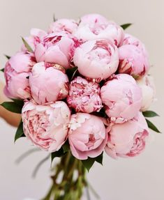 When they think of pink flowers, they think of peonies. Deliciously fragrant, they start as a small ball (think the size of a golf ball) and open up to become a big ball (think the size of softballs o Peonies And Hydrangeas, Peonies Garden, Peonies Bouquet, Pink Peonies, Flowers Garden, Yellow Roses, Pink White, Bouquets, Peonies Wallpaper