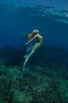 """ Hannah Mermaid "" Photographer: Jim Ward ༺ß༻ Siren Mermaid, Mermaid Cove, Mermaid Fairy, Sea Siren, Mermaid Kisses, Fantasy Creatures, Mythical Creatures, Sea Creatures, Real Mermaids"