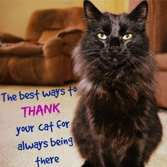 Thanking our cats for always being there starts with natural ingredients #PetsLoveBeyond