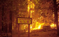 State of emergency declared in wildfire near Yosemite - Framework - Photos and Video - Visual Storytelling from the Los Angeles Times Yosemite California, California Wildfires, Yosemite National Park, National Forest, Tuolumne County, Wildland Firefighter, Fire Image, Wild Fire, Military Pictures
