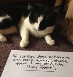 Cats can be assholes, but they're just too loveable for us to do anything about it. Cat shaming is the perfect win-win way to get back at them – we can feel like we've punished our cats while they get to continue to act like total dicks. Cats Are Assholes, Funny Animals, Cute Animals, Cute Cat Memes, Cat Shaming, Public Shaming, Bad Cats, Bad Kitty, Funny Cute