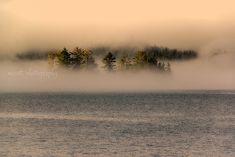 Vancouver Island Landscape Photography  Romantic Moody Trees Fog Pacific Northwest Art Tofino British Columbia