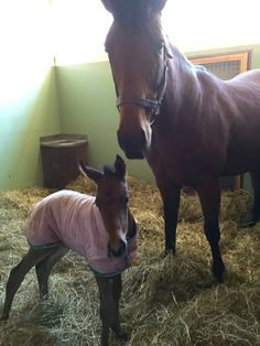 2016-02-28 | Canadian champion older mare SISTERLY LOVE has given birth to her first foal, a filly by Deep Impact.
