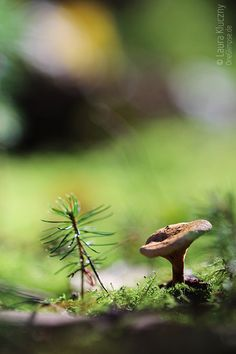 Little mashroom in the big forest