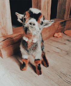 Cute Baby Cow, Baby Animals Super Cute, Cute Wild Animals, Cute Little Animals, Cute Funny Animals, Baby Farm Animals, Baby Animals Pictures, Cute Animal Pictures, Cute Dogs And Puppies