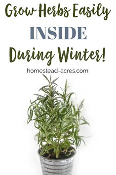 Indoor Container Gardening I love growing herbs indoors in the winter! Save money by growing your own herbs indoors. Check out these 5 easy to grow herbs and tips for beginners. Indoor Vegetable Gardening, Container Gardening, Organic Gardening, Gardening Tips, Pallet Gardening, Hydroponic Farming, Hydroponic Growing, Diy Hydroponics, Growing Vegetables Indoors