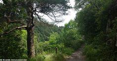 Devil's Glen Wood – w zalesionym wąwozie diabła Dublin, Country Roads, Wood, Plants, Woodwind Instrument, Timber Wood, Trees, Plant, Planets