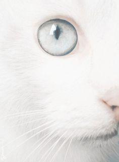 ** Linger on, pale blue eyes. [Lou Reed
