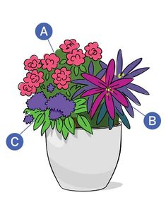 For a showstopping display of contrasting color, consider this bold floral combo: A: Coral Drift rose. B: 'Chameleon' spurge. C: 'Marine' heliotrope. Buying a growing details here.