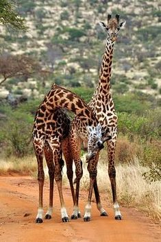 Amboseli National Park - Kenya