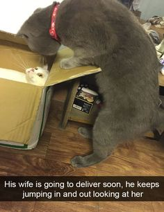 Really Funny Animal Pictures That Make You Cry With Laughter - 31