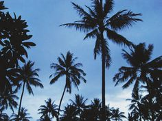 palm trees tumblr - Google Search