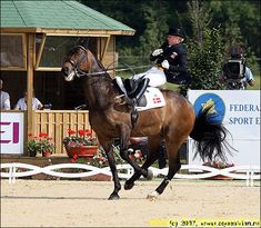 Oh Dear - When Dressage goes wrong