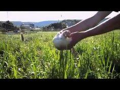 Generation Organic / Gen-O Videos