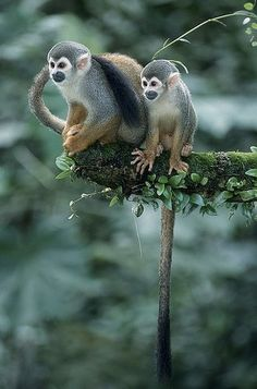 Who can't love monkeys? They're so agile and cheeky!