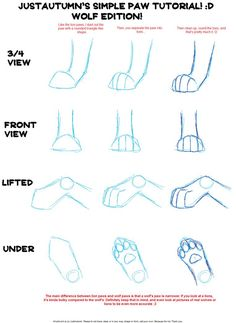 Drawing wolf paw positions