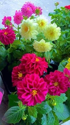 Beautiful Bouquet Of Flowers, Exotic Flowers, Amazing Flowers, Beautiful Roses, Pretty Flowers, Colorful Flowers, Spring Flowers, Beautiful Gardens, Wallpaper Nature Flowers
