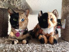 Les chats sont de véritables petites stars de l'Internet et ne cessent jamais d'attirer l'attention ! Tant par leur malice que par leurs petites bouilles super mignonnes, ces boules de poils font fondre petits et grands. SooCuriousvous présente 12 chats qui ont réussi &...