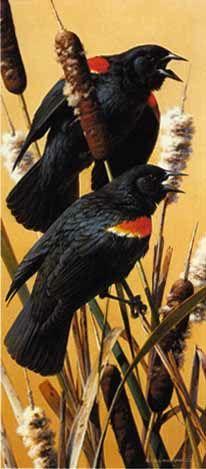 brenders-red-winged-blackbirds.jpg 206×469 pixels