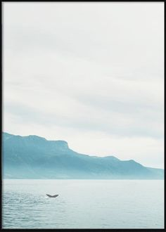Seascape with Whale Tail Tropical Posters, Whale Tail, Mountains, Beach, Nature, Travel, Naturaleza, Viajes, The Beach