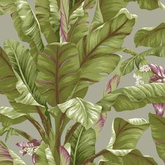 PLEASE NOTE, THIS PRODUCT IS FOR A SAMPLE OF THE WALLPAPER LISTED ABOVE. - From the Ashford Tropics collection by York Wallcoverings. Please allow 1 - 2 weeks for samples to be delivered. Please note,