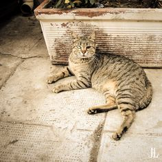 Mean Streets by Jari Lindeman, via Street Fighter, Palermo, Photo Galleries, History, Gallery, Cats, Amazing, Animals, Instagram