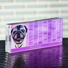 How cool. A photo of your pet and his/her DNA code by Signature DNA Unleashed