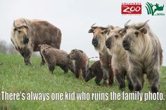 Were you always that kid in your family photos? http://give.columbuszoo.org/adopt