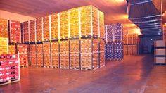 Biofume Coolstore Systems is een Nieuw-Zeelands bedrijf dat zich specialiseert in technologie ter bestrijding van schimmel, bacteriën en ethyleen in opslagfaciliteiten. Het voornaamste product is een zelfsturend apparaat dat de gebruiker een eenvoudig en goedkoop middel in handen geeft. Roger Cherry  Biofume Coolstore Systems  Tel: +64 (0)21 494 036  roger@biofume.co.nz    agf.nl