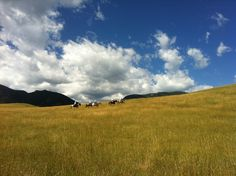 Eatons' Ranch, Wyoming.  Heaven on earth in the summer!