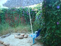 """My own backyard beach in San Rafael....I brought a few plugs of beach grass back from Michiana and they are taking over...note the """"Stop 40"""" sign on fence!"""