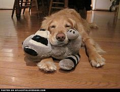 @Kayla Lewis - who does this remind you of with his babies? Sweet Golden Retreiver Pup - A Place to Love Dogs