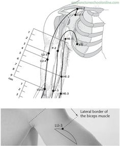 LU-4 Clasping the White XIABAI - Acupuncture Points -2