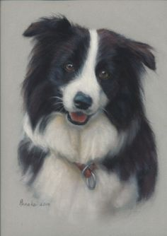 Animal Paintings, Animal Drawings, Drawing Animals, Pet Dogs, Dog Cat, Border Collie Art, Dog Artist, Raining Cats And Dogs, Cute Little Animals
