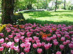 messer tulipano 2015