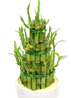 Salvia, Ikebana, Feng Shui, Planter Pots, Health, Hamsa, Medical, Fitness, Health Care
