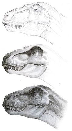 Stages of drawing a great T-Rex. Artwork by Sergey Krasovskiy