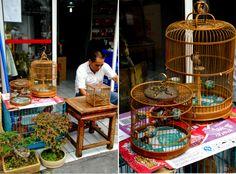 shanghai_birds_speculoosriz