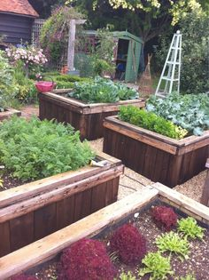 July 17, 2011: @jimmyymac Fabulous growing weather.Here's our veg garden : )