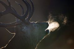 even the bucks do it...love this by Sam Rowley