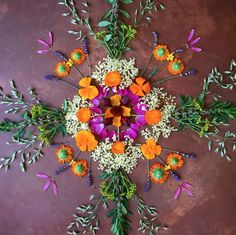 Medicine flower mandala ~ milky oats, elder, calendula, rue, California poppy, motherwort, echinacea, lavender and hibiscus, mullein and rose // photo: Juliet Blankespoor.