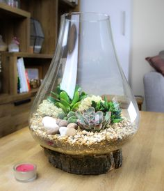 Curved Glass Terrarium on Real Wood Base - 2 Sizes Available Large Terrarium, Glass Terrarium, Terrarium Kits, Small Cactus Plants, Decorative Pebbles, Curved Glass, Order Up, Plant Care, Real Wood