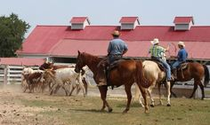 Step back in time to experience more than 100 years of Texas history. Your Texas adventure awaits. Year Of Independence, Texas History, You Never Know, Back In Time, Adventure Awaits, Places Ive Been, Ranch, Horses, Park