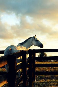 I want a horse ranch. I loveeeee horses. <3 they represent everything I want to have: freedom, beauty, strength and clarity.