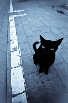 Can I help you? #black #cat
